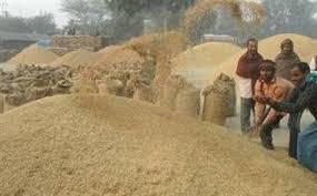मौसम अनुकूलता कारण धान उत्पादनमा वृद्धि