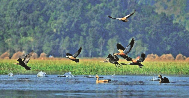 कञ्चनपुरका नदी, तालतलैया बसाइँ सारेर आउने चराको चहलपहल बढ्याे