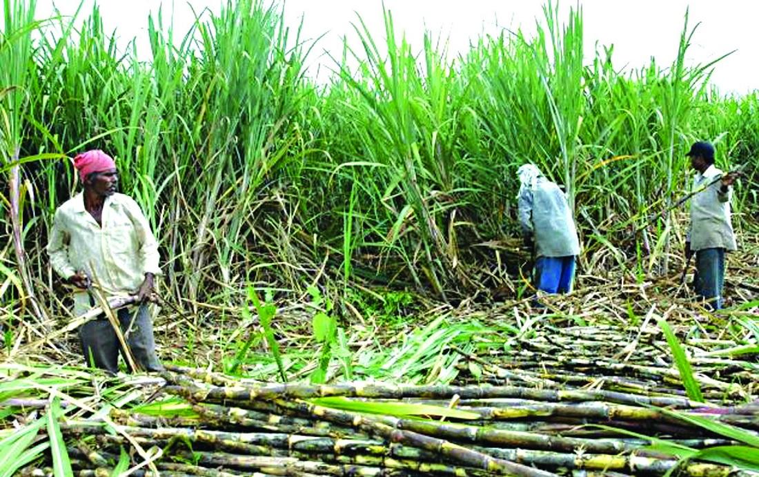 उखु बेचेको रकम पाउन किसान आए काठमाडौंः ६ उद्योगले ४१ करोड अझै दिएनन